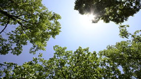 Beautiful tree tops on the bright blue sky. HD CRANE: Beautiful tree tops on the bright blue sky and sun rays, wide angle stock video footage