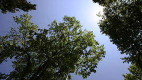 Beautiful tree tops on the bright blue sky. HD CRANE: Beautiful tree tops on the bright blue sky and sun rays, wide angle stock video