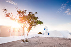 Beautiful tree in the town of Oia at sunset Stock Images