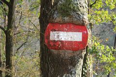 Beautiful tree with traffic sign. Traffic sign inside the tree , forest tree Stock Image