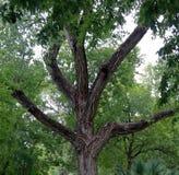 Beautiful tree in Umlauf Sculpture Garden, Austin royalty free stock images