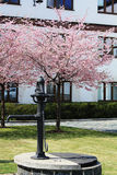 Beautiful tree. Very beautiful tree with pink petals Royalty Free Stock Image