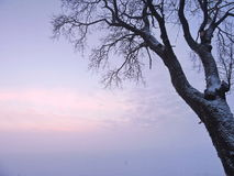 Beautiful tree in winter Royalty Free Stock Images