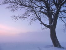Beautiful tree in winter Royalty Free Stock Photography