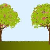 Beautiful trees Royalty Free Stock Photos