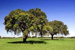 Beautiful trees Royalty Free Stock Image