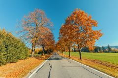 Beautiful trees on alley in autumn stock image