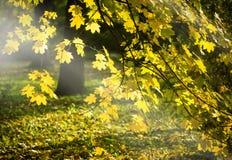 Beautiful trees in the autumn stock photos