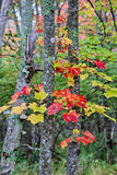 Beautiful Trees with Autumn leaves Royalty Free Stock Photography