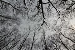 Beautiful Trees in Autumn. A look up to the sky at trees lacking leaves Royalty Free Stock Image