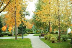 Beautiful trees in   park. Beautiful trees in autumn park Royalty Free Stock Photo