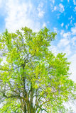 Beautiful trees branch on blue sky . Stock Photography