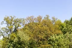 Beautiful trees. With colorful foliage, landscape with blue sky royalty free stock image