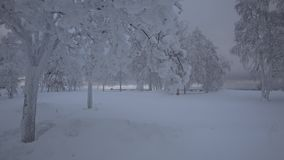 Beautiful trees, covered by snow in winter stock video