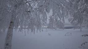Beautiful trees, covered by snow in winter stock video footage