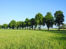 Beautiful spring  trees and field, Lithuania Royalty Free Stock Images