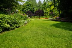 Beautiful trees and green grass in garden. Beautiful flowers royalty free stock photos