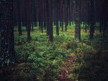 trees in green  forest n stock image