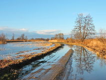 Beautiful trees and highroad in flood time Stock Photography