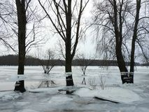 Trees with ice pieces after flood, Lithuania Royalty Free Stock Photos