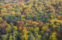Beautiful trees in indian summer Royalty Free Stock Photo