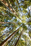 Beautiful trees. nature green forest. Royalty Free Stock Image