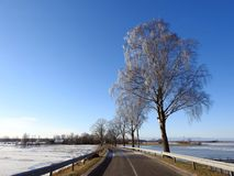 Beautiful  trees near road in winter, Lithuania Stock Images