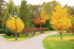 Beautiful trees in   park. Beautiful trees in autumn park Stock Photo