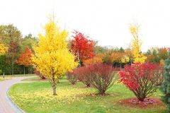 Beautiful trees in   park. Beautiful trees in autumn park Royalty Free Stock Image
