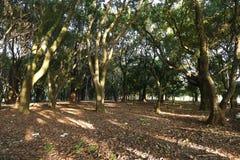 Beautiful trees in park Stock Photos