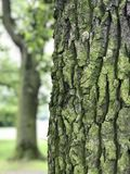 Beautiful trees in the park Royalty Free Stock Photography