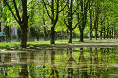 Beautiful trees reflected in a puddle Royalty Free Stock Photos