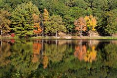 Autumn Tree Mirror. Beautiful trees showing off their true foliage colors of Orange`s red`s yellow`s and greens, reflecting off the still water royalty free stock images