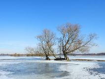 Beautiful trees in spring flood field, Lithuania Stock Photos