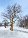 Beautiful trees in spring flood field, Lithuania Royalty Free Stock Photography