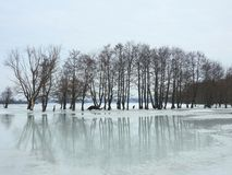 Beautiful trees in spring flood field, Lithuania Royalty Free Stock Images