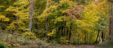 Beautiful trees starting to change colors in early fall stock photography