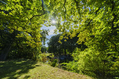 Beautiful trees with sun. Near Malmo Castle, Sweden Stock Photography