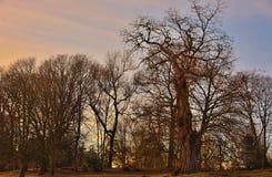 Beautiful trees at sunset Royalty Free Stock Photo
