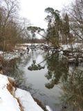 Nice trees on river coast, Lithuania Stock Photo