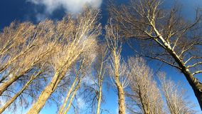 Beautiful trees view sunny day stock footage