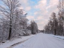 Road and beautiful winter trees, Lithuania Royalty Free Stock Images