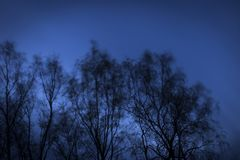 Beautiful trees in the wind at night. Stylish and beautiful  trees in the wind at cold night Royalty Free Stock Photos