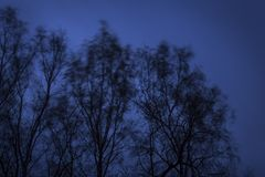 Beautiful trees in the wind at night. Stylish and beautiful  trees in the wind at cold night Stock Photography