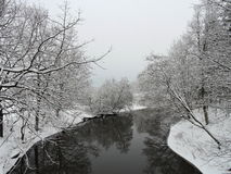 Beautiful trees in winter near river Stock Photos