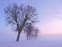 Beautiful trees in winter Royalty Free Stock Photography