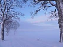 Beautiful trees in winter Stock Photo