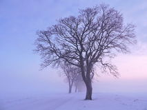 Beautiful trees in winter Royalty Free Stock Photos