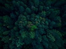 Beautiful trees in woodland, top down aerial drone view.  royalty free stock image