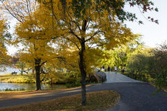 Beautiful trees with yellow leaves stock image